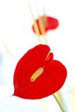 Embrassez l'impression (la languette rouge) Photographie stock libre de droits