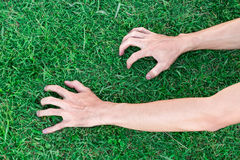 Embreagem da mão do homem do close up na grama verde, conceito saudável Imagens de Stock