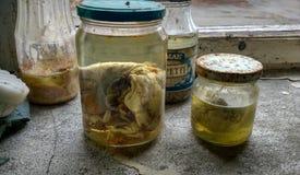 Embrione nel laboratorio in Pripyat Fotografia Stock