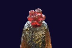 embrione umano 16-cell su un a punta d'ago Fotografia Stock