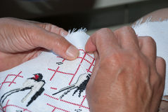Embroider on canvas. Woman's hands embroider on canvas swallow Royalty Free Stock Photo
