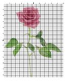 Embroider flower for an embroidery hands a cross Royalty Free Stock Photos