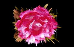 Embroidered rose. Stock Photography