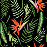 Embroidered tropical Stock Image