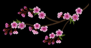 Embroidery branch of cherry blossoms on a black background Royalty Free Stock Photography
