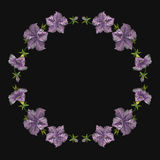 Embroidery crewel floral petunia decoration. Vector illustration Stock Photography