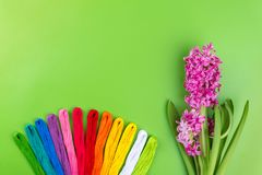 Embroidery rainbow colors Floss on a green Background with pink spring flower. Concept for sewing and embroidery, Womans day 8 Mar. Ch, Mothers day. Top view Royalty Free Stock Photos