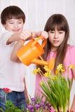 Embroma las flores de riego Fotografía de archivo libre de regalías