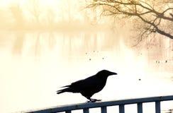 Embrumez au-dessus d'un lac avec les canards et le corbeau de natation Photo stock