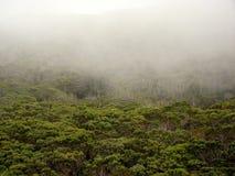 Embrumez au-dessus de la forêt, canyon de Waimea, Kauai, HI images libres de droits