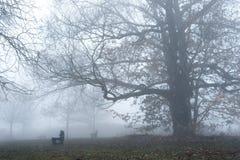 Embrumez dans une forêt près du lac, parmi les bancs Photo stock