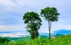 Embrumez et l'arbre deux sur la montagne après pluie dans Phrae Thailan du nord Photos stock