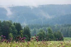 Embrumez l'augmentation au-dessus des rangées de la forêt conifére photo libre de droits