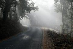Embrumez la perforation par la forêt sur une route espagnole image libre de droits
