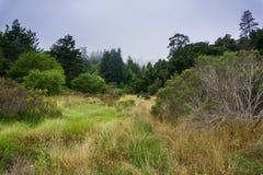 Embrumez le roulement au-dessus des collines et des prés, Santa Cruz, la Californie image libre de droits