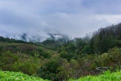 Embrumez le roulement au-dessus des collines et des vallées, la Californie photos libres de droits