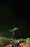 Embryo. Little plant in the wood Stock Images