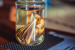 Embryo bat in glass jar with formaldehyde Stock Image