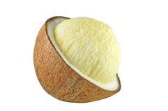 Embryoknop van kokosnoot Royalty-vrije Stock Fotografie