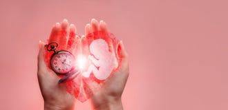 Embryosilhouet van document en klok in vrouwenhanden met gebroken hart Handen op de linkerkant Roze achtergrond met exemplaarruim stock foto's