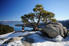 Emerald Bay viewpoint, Lake Tahoe. A pine on the rocks at Emerald Bayviewpoint, Lake Tahoe with mother and daughter tourists in the background having fun Royalty Free Stock Photography