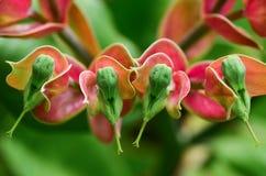 Emerald-bird Cactus Royalty Free Stock Photography
