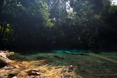 Emerald blue Pool at Krabi Thailand Stock Photos