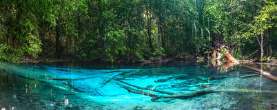Emerald blue Pool. Krabi, Thailand. Amazing blue water in the beautiful lake at the forest Royalty Free Stock Photography