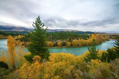 Autumn landscape with yellow fall leaves and azure blue river, hills of Central Otago in distance, Clutha River, New Zealand royalty free stock photo