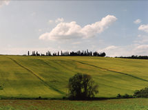 Emerald City. This is a view of the Tuscan Landscape in the Crete Senesi, near the Val d'Orcia region of Tuscany. Cypress trees dot the green landscape. Shot on royalty free stock photos
