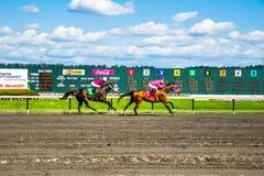 Emerald Downs, raça é corrente com a mangueira do número um na ligação Imagens de Stock Royalty Free