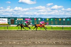 Emerald Downs, race is underway with number one hose in the lead Royalty Free Stock Images
