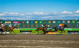 Emerald Downs, race is underway with number three hose in the lead Royalty Free Stock Photos