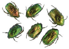 Emerald gold bugs set Royalty Free Stock Image