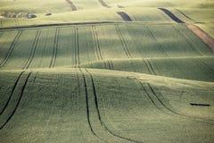 Emerald Green Agricultural Field d'annata Immagini Stock