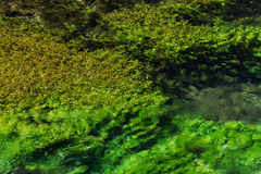 Emerald green flowing river water with seewead, abstract backgro Royalty Free Stock Photography