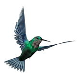 Emerald hummingbird - 3D render. Emerald hummingbird flying isolated in white background - 3D render Royalty Free Stock Photos