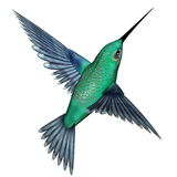 Emerald hummingbird - 3D render. Emerald hummingbird flying isolated in white background - 3D render Royalty Free Stock Photo