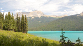 Emerald Lake Firs Royalty Free Stock Photography