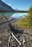 Emerald lake landscape with dead trunk. British Columbia. Canada Royalty Free Stock Photos
