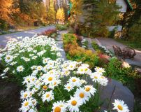 Emerald Lake Lodge Bloom stock foto