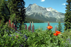 Emerald lake in summer. Flowers bordering Emerald lake Yoho national park, British columbia,canada Stock Images