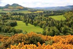 Emerald pastures of Velvet in Scotland  Stock Images