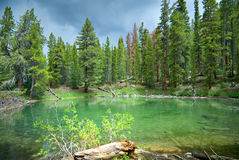 Emerald Pond Stock Images