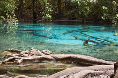 Emerald Pond in bright colors. Royalty Free Stock Photography