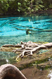 Emerald Pond in bright colors. Royalty Free Stock Images