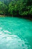 The Emerald pond, Krabi, Thailand Royalty Free Stock Image