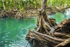 Emerald Pool är den osedda pölen i mangroveskog på Krabi i Thailand, vattenflöde, långa exponeringstekniker Arkivfoto
