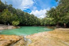 Emerald Pool är den osedda pölen i mangroveskog på Krabi i Thail Arkivbild