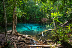Emerald Pool at Krabi in Thailand Royalty Free Stock Photo